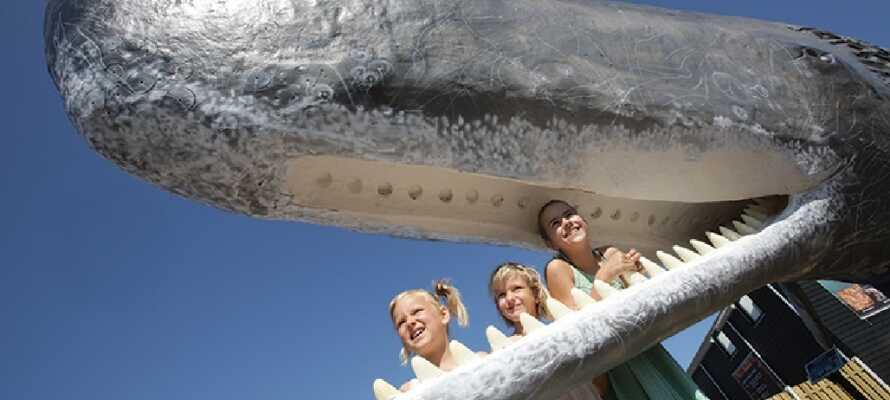 Besøg akvariet, hvor I kan se fisk i alverdens afskygninger, sælsafari, finde rav på den indendørs strand og meget mere.