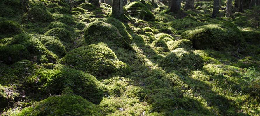 Dere bor rett ved Smålands flotte natur med skog og innsjøer.
