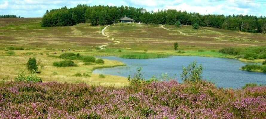 Dra på miniferie til Midtjylland og bo i kort afstand til Lækmose Sjø og den vakre Trehøje Naturpark.