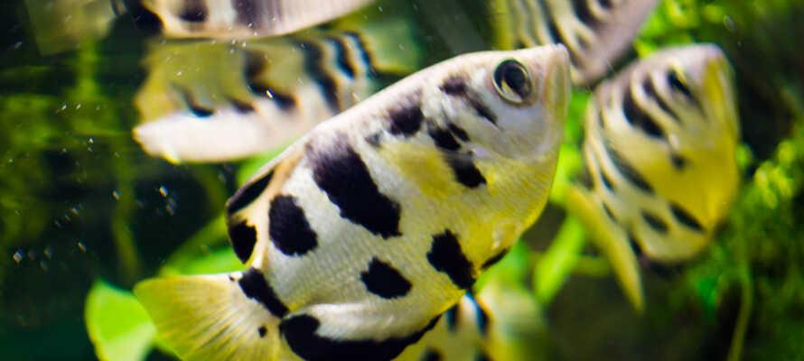 Fascinerende og flotte dyr, hvis I har behov for at opleve eksotiske dyr helt tæt på.