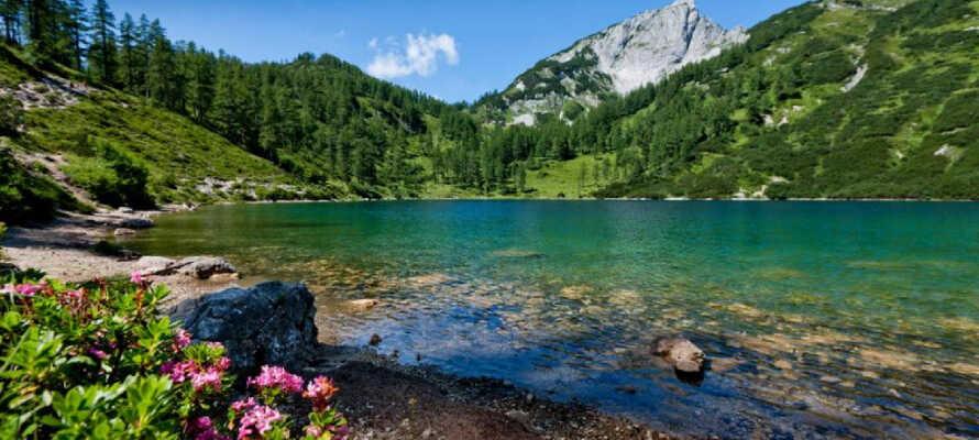 Erkunden Sie die Landschaft und erkunden Sie die spektakuläre Landschaft des Salzkammerguts mit Bergen, Wäldern und Badeseen.