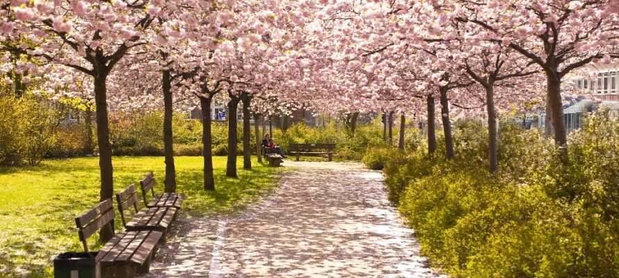 Njut av en stilla stund i den botaniska trädgården i Kiel där ni finner en härlig grnö oas mitt i staden.