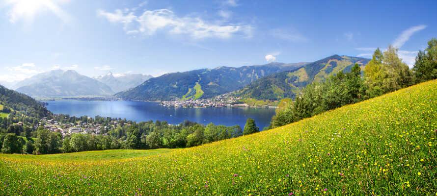 Alm betyder eng på tysk og langs vandrestierne passerer du mange smukke og underfulde enge, en del med kvæg.