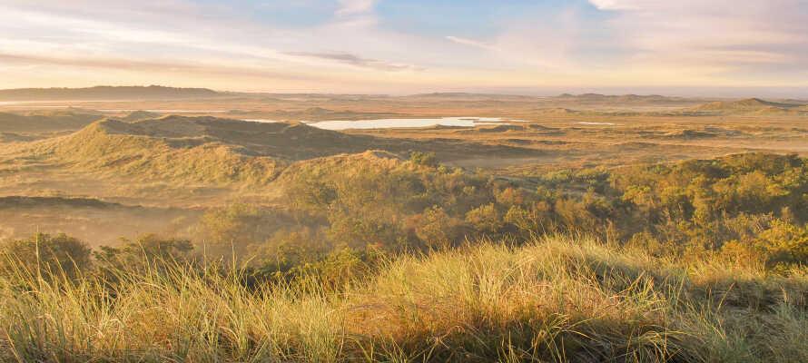 Opplev Nasjonalpark Thy og den ville naturen. Dyrk friluftslivet i de storslåtte omgivelsene.