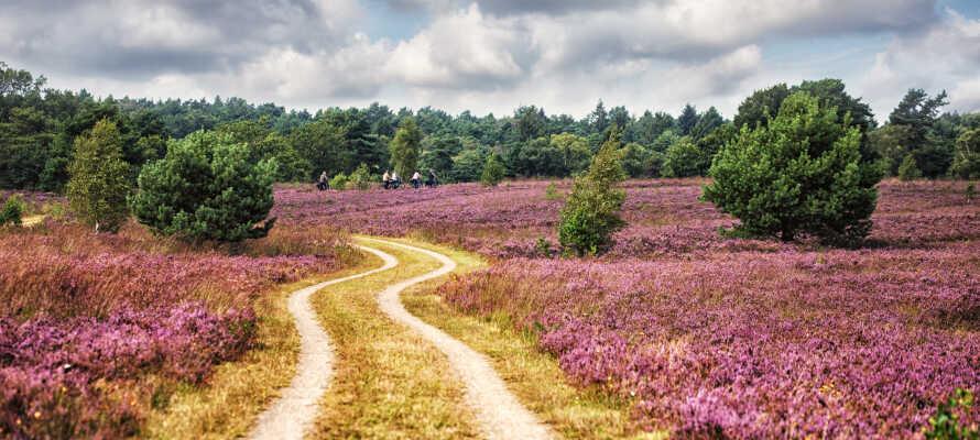 Hotellet ligger inte långt från den stora heden Lüneburger Heide, där ni kan bege er ut på mysiga vandrings- och cykelturer