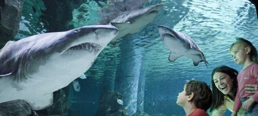 Inte långt från hotellet ligger det populära akvariet.