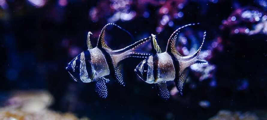 Machen Sie einen Ausflug in den AquaDom, das riesige Aquarium mit 35 Wasserbecken mit Haien, Tintenfischen und vielen exotischen Fischen.