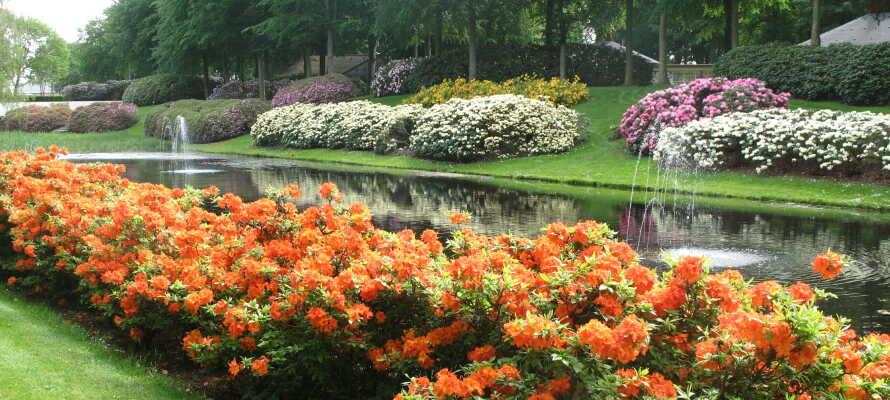 Besøk den vakre rhododendronparken i Brønderslev, når de velduftende blomstene blomstrer.