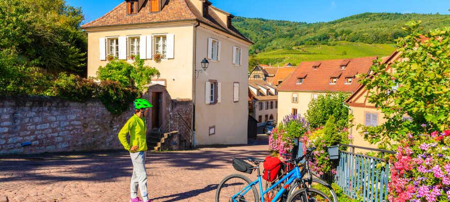 Tag på herlige vandreture i den smukke natur, eller udforsk den nærliggende 100 km. lange mountainbikerute på to hjul.