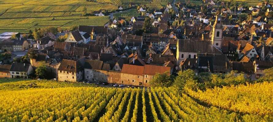 Turckheim är en trevlig vinstad och ni får inte missa att besöka de många vingårdarna som ligger runt staden.