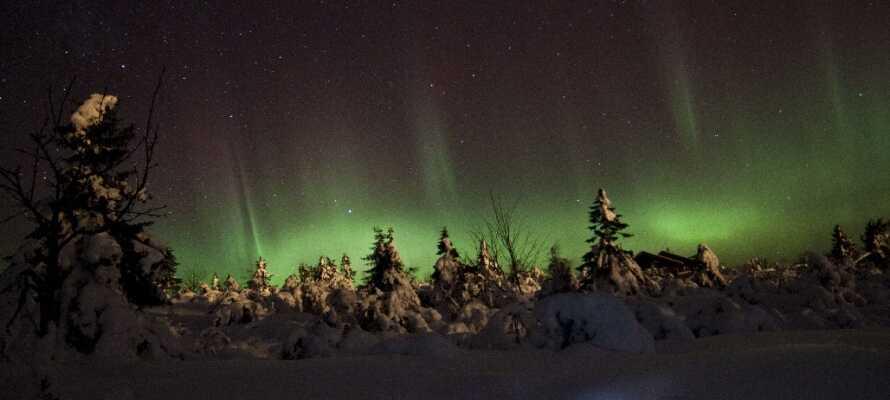 Er man rigtig heldig kan man opleve Nordlyset og se det reflektere i sneen på en kold vinteraften.
