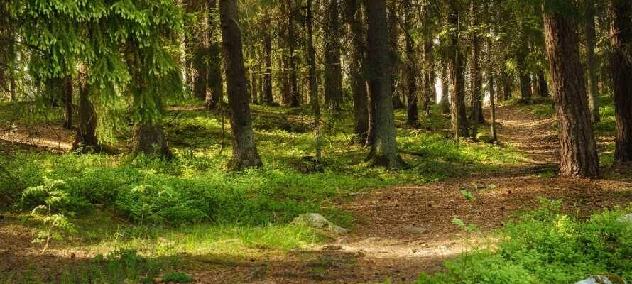 Gå en fottur i en av Dalarnas mange frodige skoger.