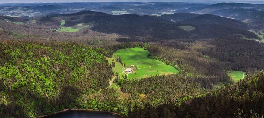 Das Hotel Pflug liegt in der schönen, beliebten Gegend des Schwarzwalds, die eine reiche grüne Umgebung bietet.