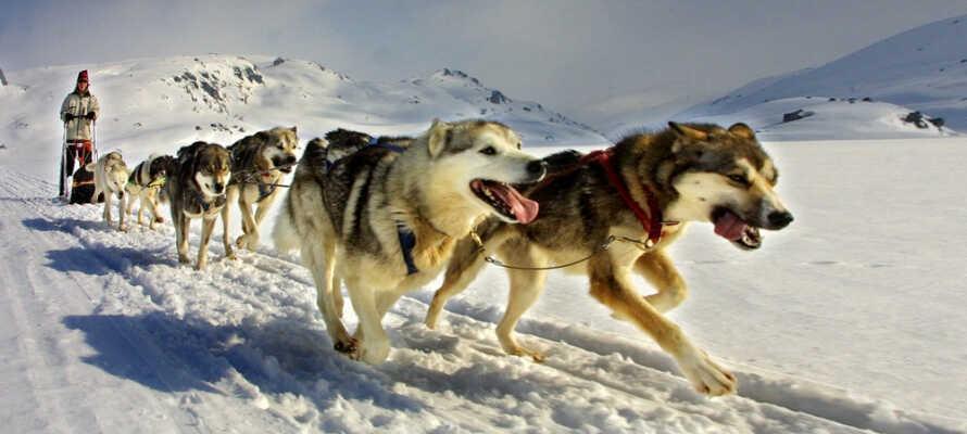 Geilo er kendt som en af Norges mest spændende destinationer hvor I kan prøve alt der har med sne at gøre.