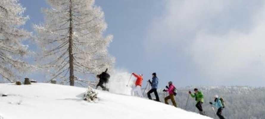 Upplev det vackra landskapet omkring Großglockner, Österrikes högsta berg