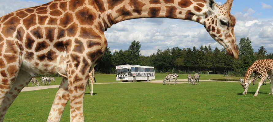 Besök Givskud Zoo, Legoland eller Lalandia. Området har många  på barnvänliga aktiviteter.