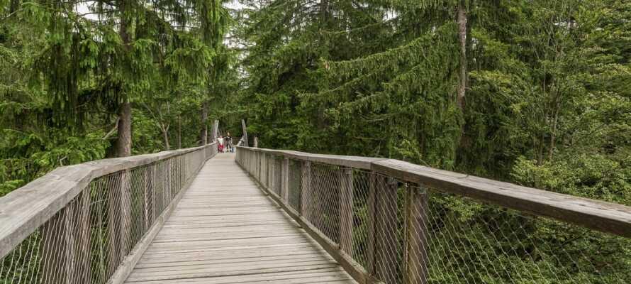 Få en helt unik opplevelse med en tur mellom trekronene i Schwarzwald! Besøk Baumwipfelpfad i Bad Wildbad med sin fantastiske utsikt.