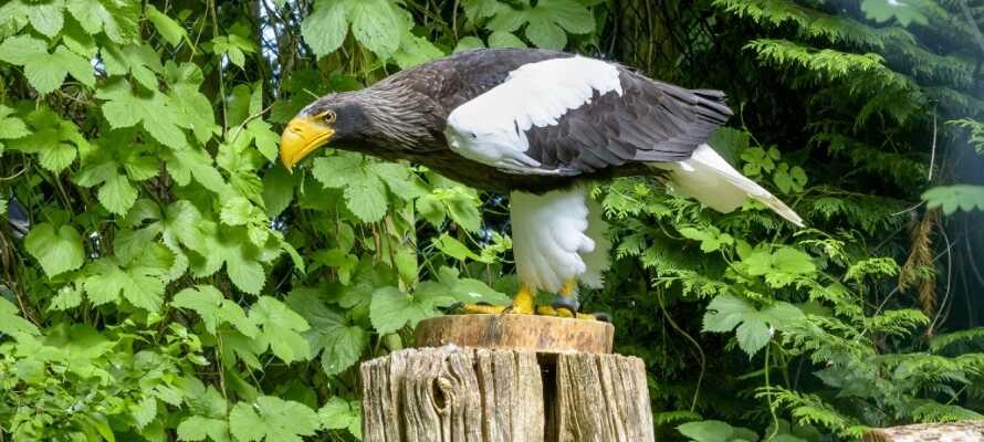 Fugleparken i Walsrode råder over mere end 650 forskellige fuglearter.