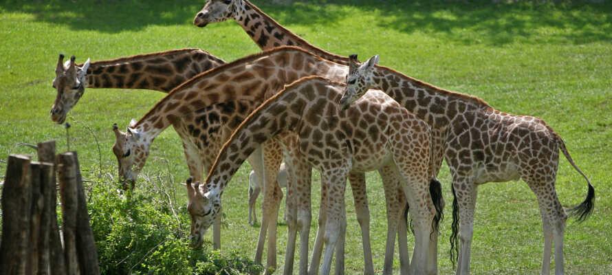 Kroen har både legeplads og hoppepude og ligger tæt på familievenlige attraktioner som Legoland og Givskud Zoo