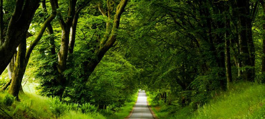 Et kvarters kørsel fra hotellet ligger Danmarks største skov, Rold Skov.
