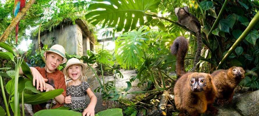 Verleihen Sie Ihrem Urlaub einen exotischen Touch mit einem Besuch im Randers Regenwald - drei Häuserblocks vom Hotel entfernt.