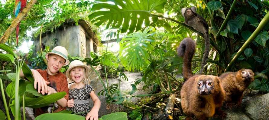 Giv jeres ferie et eksotisk præg med et besøg i Randers Regnskov – tre kvarters kørsel fra hotellet.