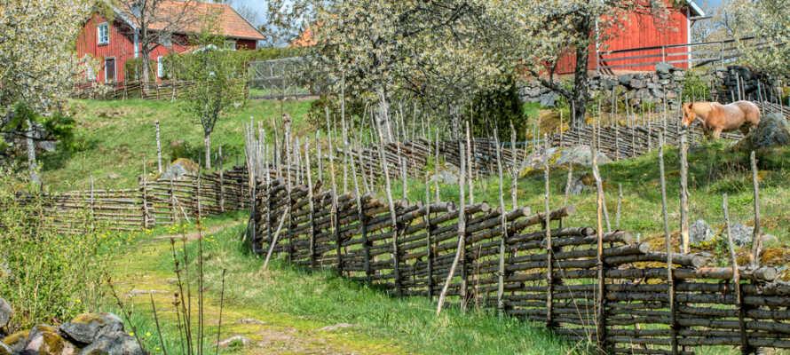 Naturen i Småland er kendt for sine smukke og uberørte områder.