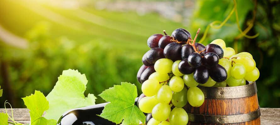 Es gibt mehrere Weingüter rund um den Gardasee, also warum nicht ein paar Flaschen Wein aus Ihrem Urlaub mitbringen?