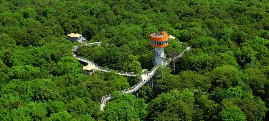Dere har dessuten et supert utgangspunkt for å oppleve naturen i Hainich National Park, som bl.a. byr på vandring i tretoppene