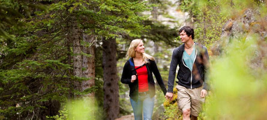 Gå en hyggelig tur skogen.