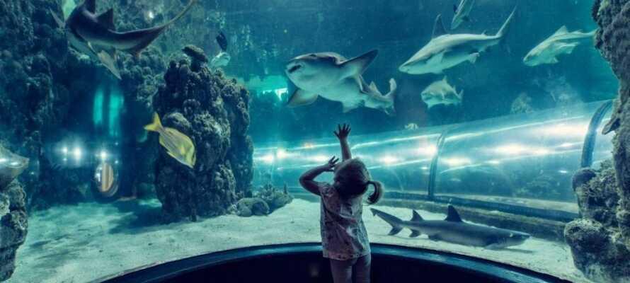 Se havets spennende arter - både hai og eksotiske fisk - svømme forbi i undervannstunnelen på Katteggatcentret.