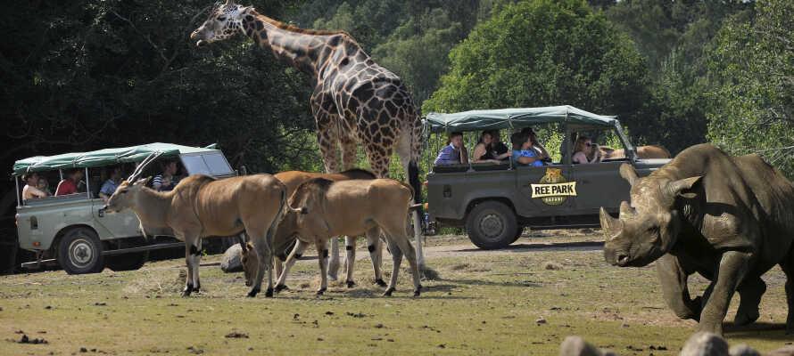 Dra på safari i Ree Park nær Ebeltoft. Opplev de store dyrene fra savannen på nært hold.