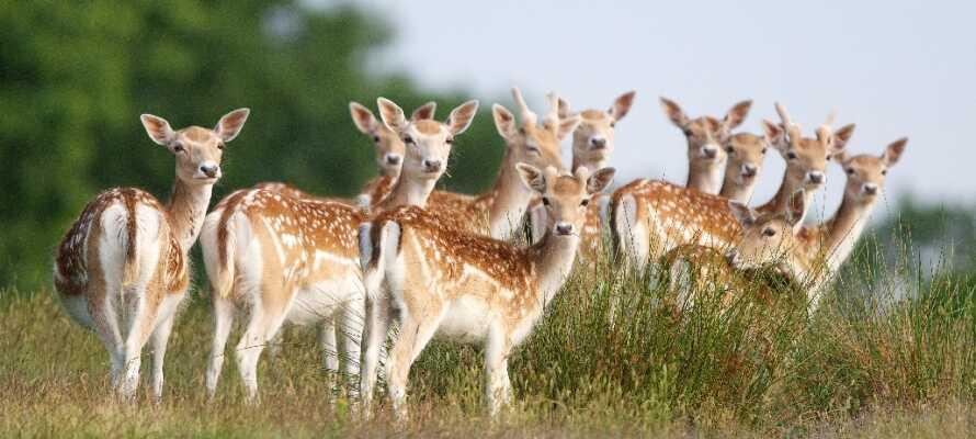 Wald- und Wildpark Rolandseck ligger ikke langt fra hotellet. Oplev de mange forskellige vilde dyr i naturlige omgivelser.