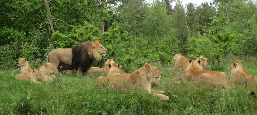 Beliggenheden giver jer perfekte forhold for at opleve en række af områdets mange muligheder såsom f.eks. Givskud Zoo.