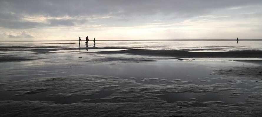 Endast ett få kilometer från Rudbøl kan ni uppleva Vadehavet och dess tidvattenslandskap och dess rika djurliv.