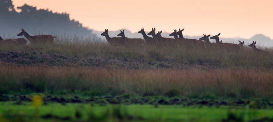 Hotellet ligger i kort afstand af Nationaal Park De Hoge Veluwe, som er et af de største naturreservater i hele landet!