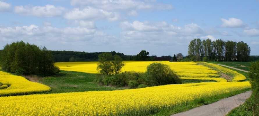 Området omkring Güstrow er en skøn naturoplevelse med store flotte marker og utallige spejlblanke søer.