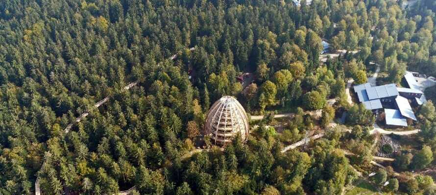 Nationalpark Bayerischer Wald har otroligt mycket att bjuda på med flera vackra leder bland annat.