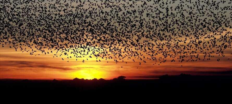 Området er kjent for fenomenet Sort Sol, hvor et utall av fugler danser i solnedgangen.