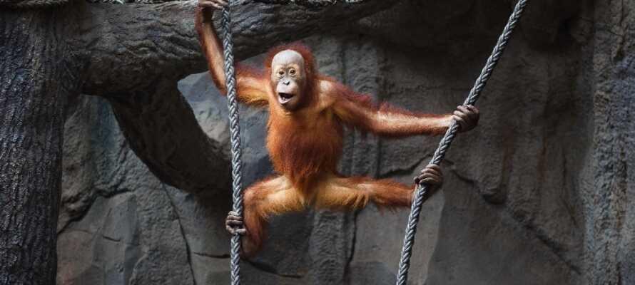 Ein schöner Familienausflug in Leipzig ist eine Tour durch den großen, modernen Zoo. Es gibt viele Aktivitäten im Park.
