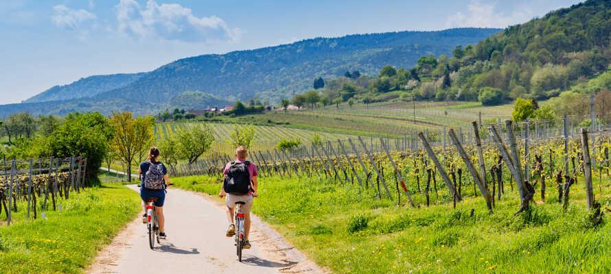 Dra på vandre- og sykkelturer i de fantastiske naturomgivelsene, som preger den tyske vinruten.