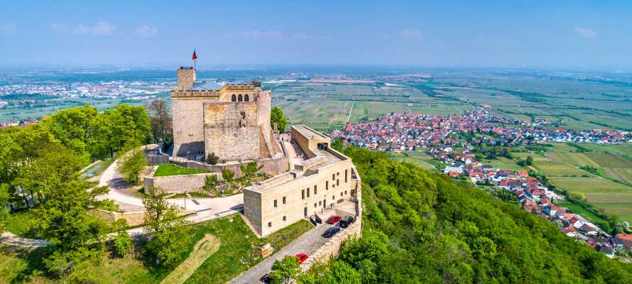 Besuchen Sie das Schloss Hambacher und erkunden Sie die umliegende Natur.