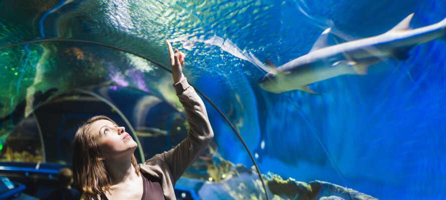 I Kattegatcentret ved Grenå kan I opleve havets farlige fisk og charmerende havpattedyr