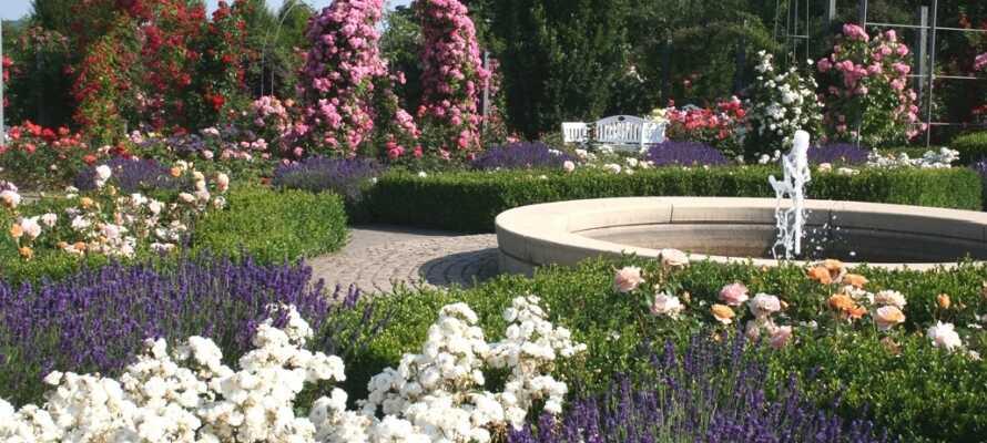 Besøk Europa-Rosarium i Sangerhausen. Den imponerende parken byr på verdens største samling av roser.
