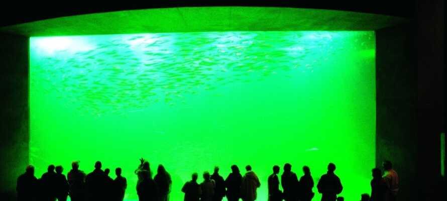 Besøg det store akvarium, Nordsøen Oceanarium, som ligger ca. 16 km fra hotellet