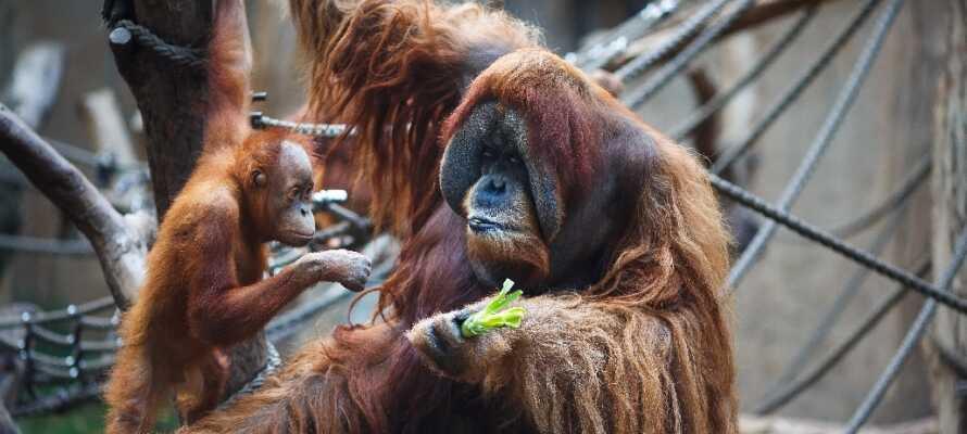Besøk byens store og moderne zoologiske hage. Mange av dyrene kan man komme helt tett innpå.