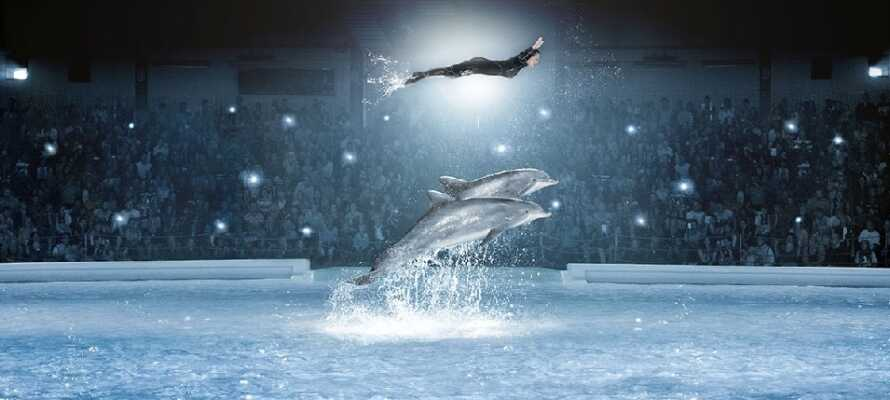 Upplev Kolmårdens Djurpark och se bla den omtalade delfinshowen.