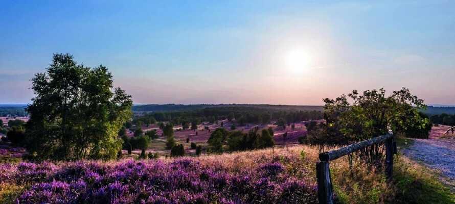 Landskabet Lüneburger Heide er et herlig sted å få frisk luft og bare nyte naturen.