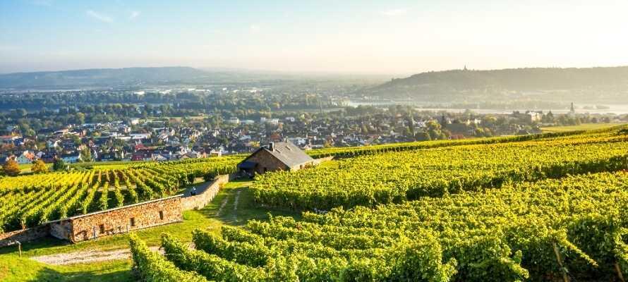 Nyd smukke vandreture og en blændende udsigt over Rhin-floddalen og store dele af det UNESCO-listede Rheingau-distrikt.