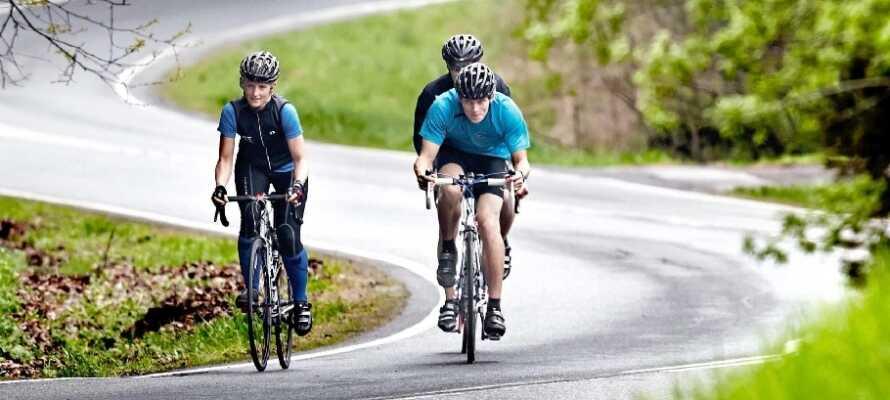 Utforsk naturen! Gå turer, eller dra på en sykkeltur i Rold skog eller  Rebild Bakker.